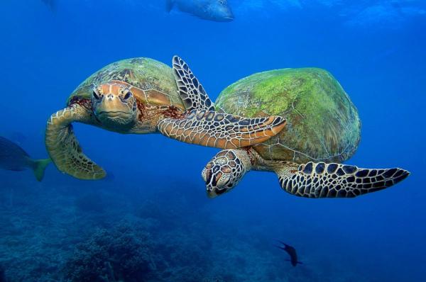 В мире. Спасли редких черепах.. животные, экзотические животные, рептилии, черепахи, Флорида