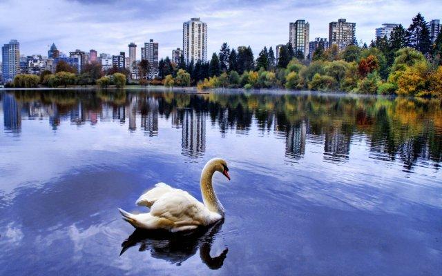 В Казани рыбу из одного озера переселят в другое. 13571.jpeg