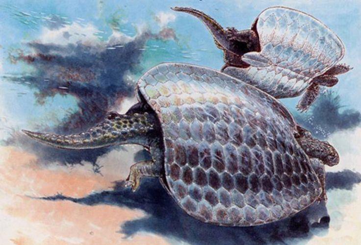 На реке Валюй нашли останки древней черепахи. черепахи