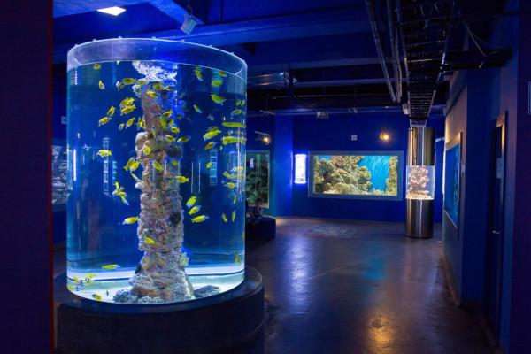 Частная компания планирует построить океанариум с дельфинами в парке «Кашкадан» в Уфе. океанариум, дельфины, крокодилы, аквариумы, рыбы, парк, Уфа