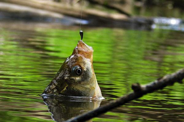 Советы рыболову, которые не оставят без улова.. 14579.jpeg