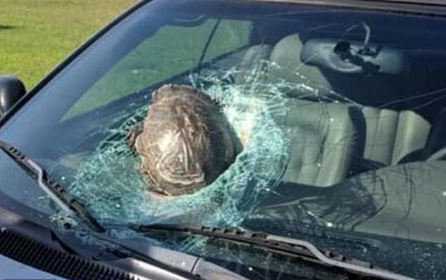 В США в воздух поднялась черепаха. черепаха