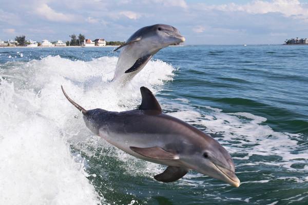 В Крыму туристы помешали специалистам обследовать погибших дельфинов. морские обитатели, морские животные, дельфины, Крым