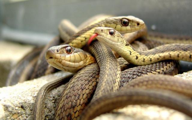 Ростовчанин развел дома змеюшник. 13598.jpeg
