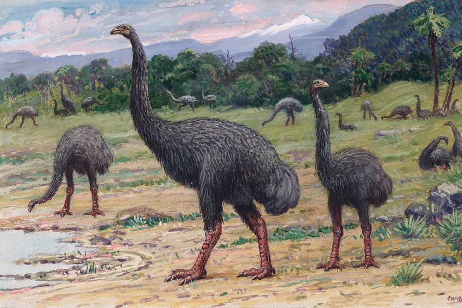 В Новой Зеландии нашли следы мао. мао