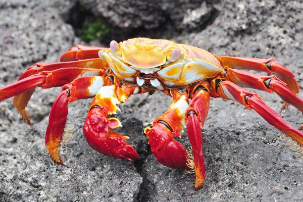 Госчиновники могут уничтожить рыбную отрасль. 14603.jpeg