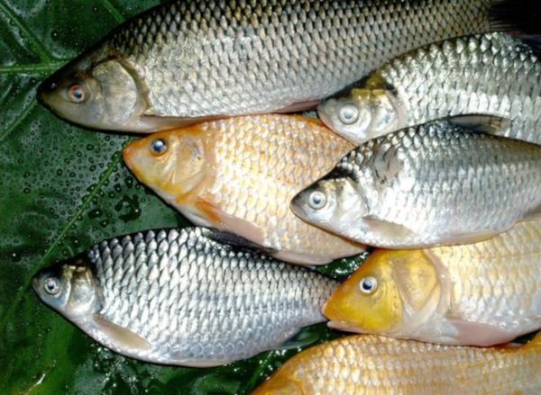В Ростовской области задержали браконьера с уловом на полмиллиона рублей. рыба, рыбалка, браконьеры, Ростовская область