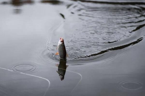 Если не взял снасти на реку. 14605.jpeg