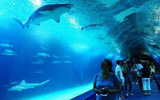 Китаянка упала в аквариум к акулам. 13612.jpeg