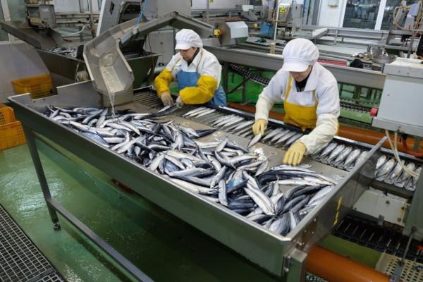 В Дагестане началась реконструкция здания будущего завода по переработке рыбы. рыба, рыбоперерабатывающий завод, Дагестан