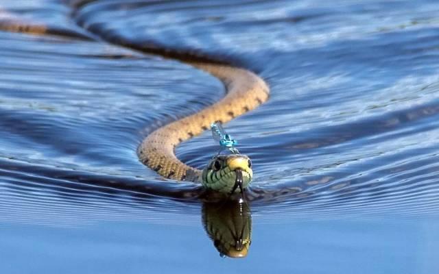 Рыбак умер от укуса морской змеи. 13621.jpeg