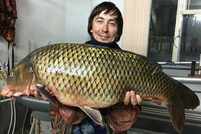 Новосибирский рыбак поймал гигантского сазана. 13627.jpeg
