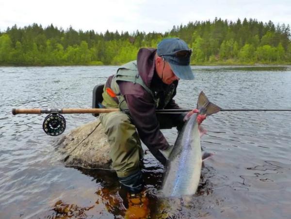 В Мурманской области рыбаки-любители смогут сдавать улов на переработку. рыба, рыбак, улов, Мурманская область