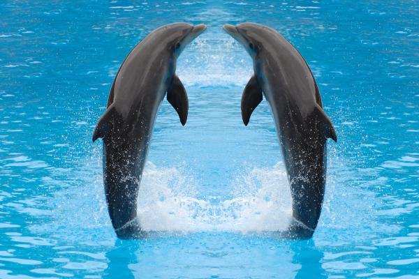 У дельфинов Ла-Манша обнаружили химикаты и ртуть. дельфины, ртуть, Ла-Манш