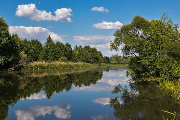 Отравление реки Кердь оценили в 4 миллиарда рублей. рыба, река, Кердь