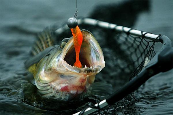Советы Рыбаку.. 13635.jpeg