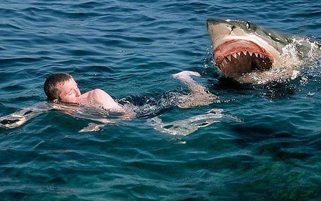 Рыбаки отбили мальчика у акулы. 13638.jpeg