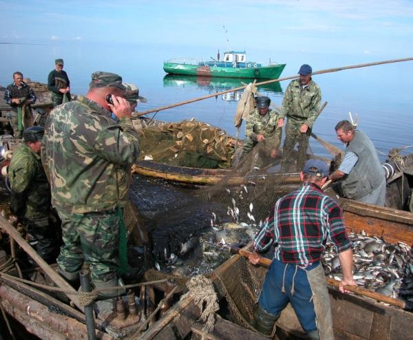 11 килограммов незаконно добытой рыбы изъяли в Псковской области за прошедшую неделю. рыба, рыбалка, Псковская область