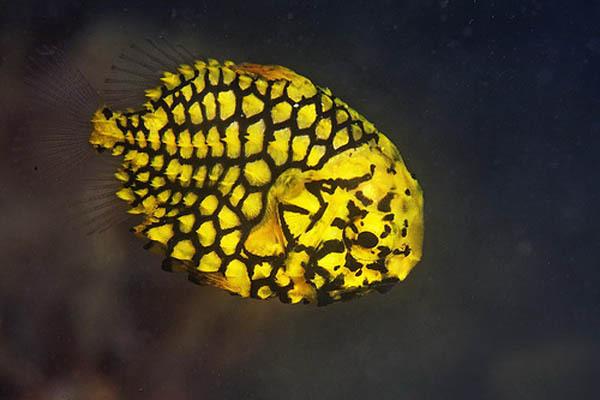 Самые красивые рыбы, которые обитают в водах Восточной Африки. 14645.jpeg