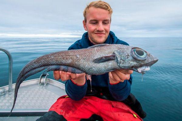Мужчина выловил рыбу с огромными глазами и съел ее. рыба, рыбак, Норвегия