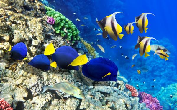 Исследователи: Рыбы могут любить. рыбы, поведение, любовь