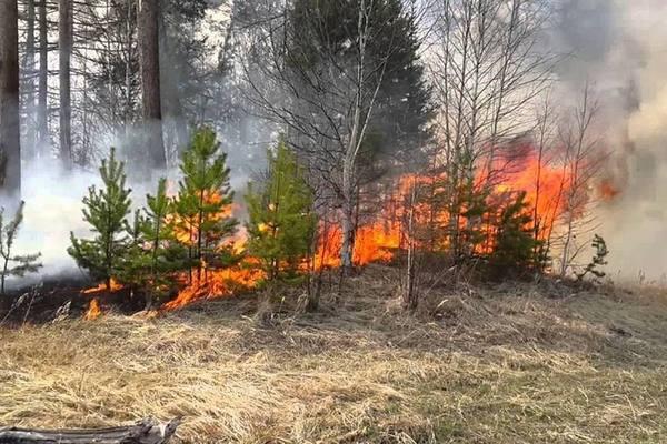 Лесной пожар. Что делать?. 13650.jpeg