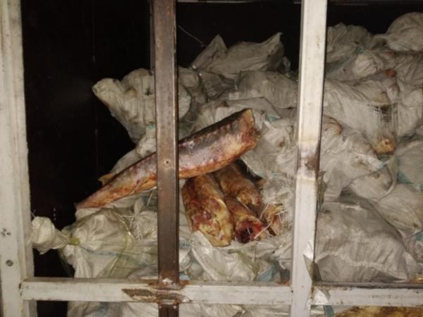 Через оренбургскую область контрабандой везли рыбу. рыба, контрабанда, Оренбургская область