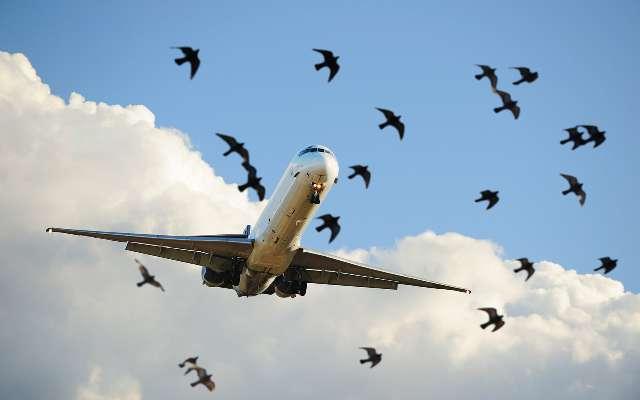 Куропатки не дали взлететь самолету в омском аэропорту. 13660.jpeg