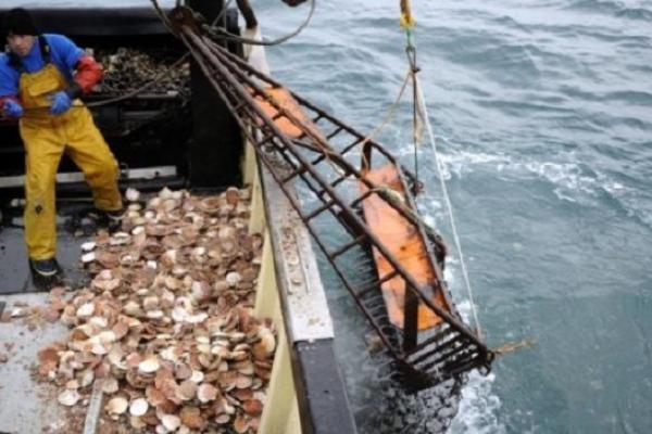 На Сахалине арестованы браконьеры, добывавшие морского гребешка. 14664.jpeg