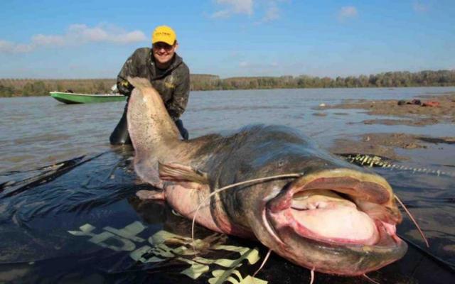 Польский рыбак поймал самого большого сома в истории. 13671.jpeg