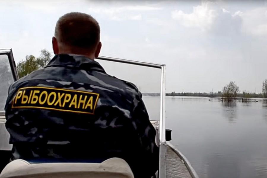Тысяча рыб в Нижегородье спасена из сетей. 15671.jpeg