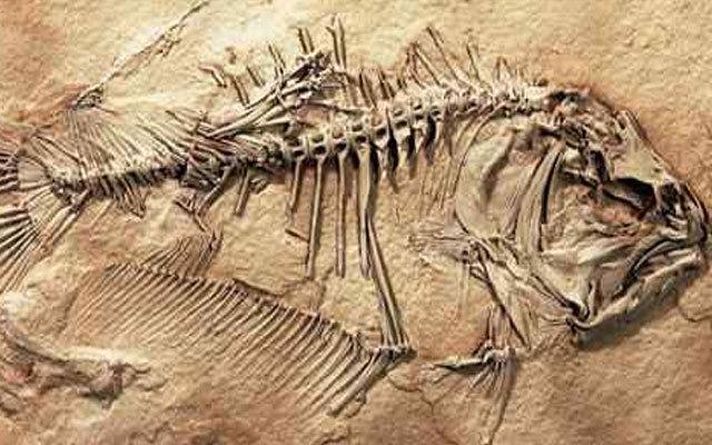 Ученые нашли древнюю пиранью. 13674.jpeg