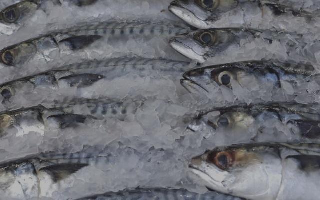 Essere Animali вступилась за рыбу. 13681.jpeg