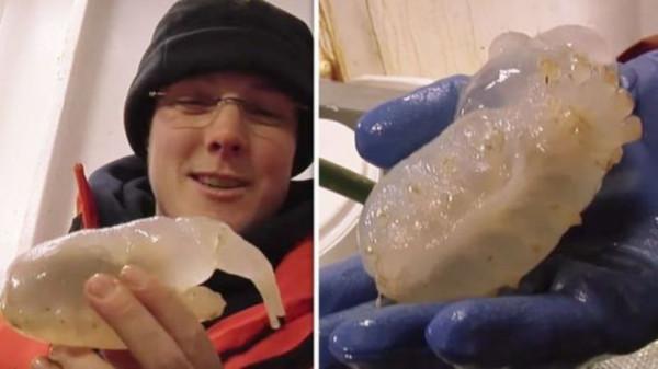 Неопознанное живое существо обнаружили в Антарктике на глубине 3,5 км. существо, Антарктика, Новая Зеландия