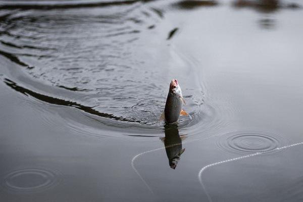 Не дарите рыбе духов, она от вас уплывет.. 13686.jpeg
