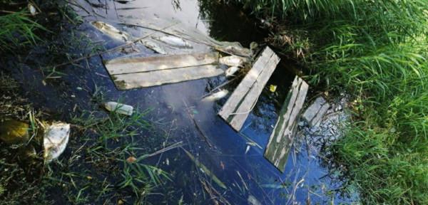 В пруду в «английском квартале» Волгограда погибла вся рыба. рыба, пруд,