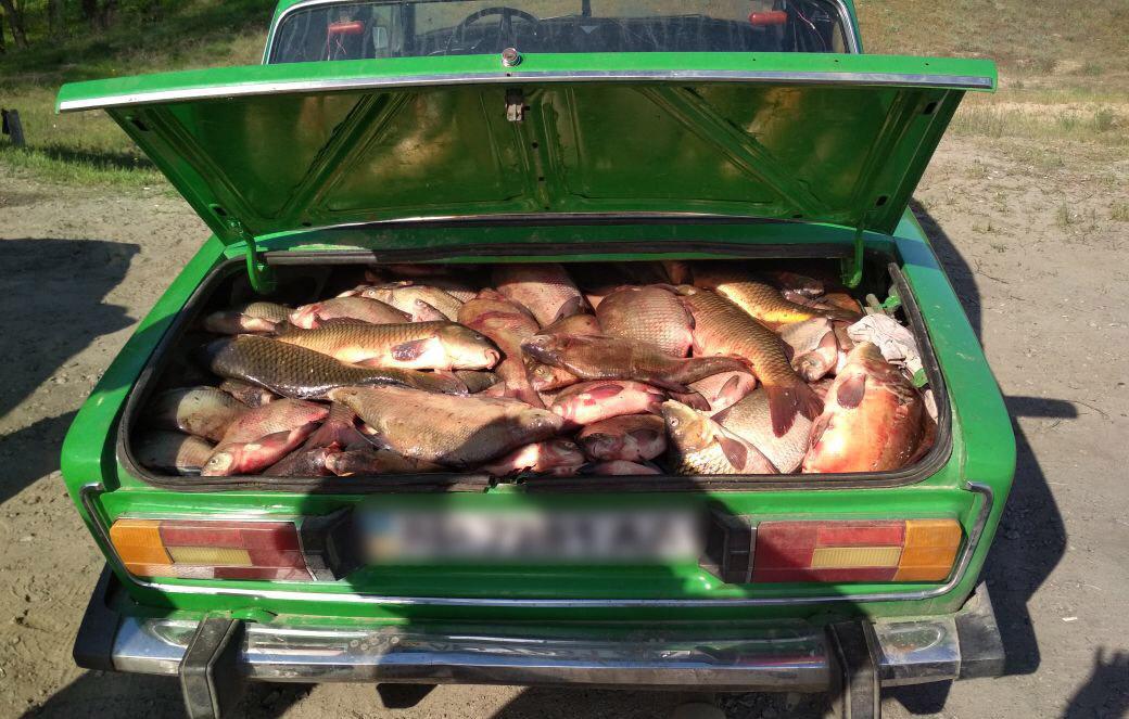Под Ростовом задержали 500 кг рыбы без документов. 15689.jpeg