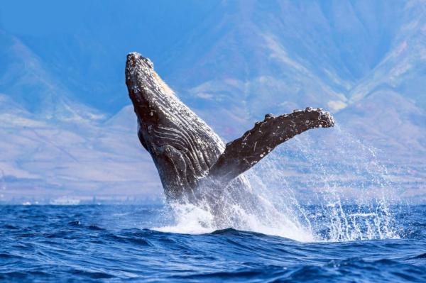 В Сети появились редкое видео резвящихся в океане китов. животные, морские обитатели, киты