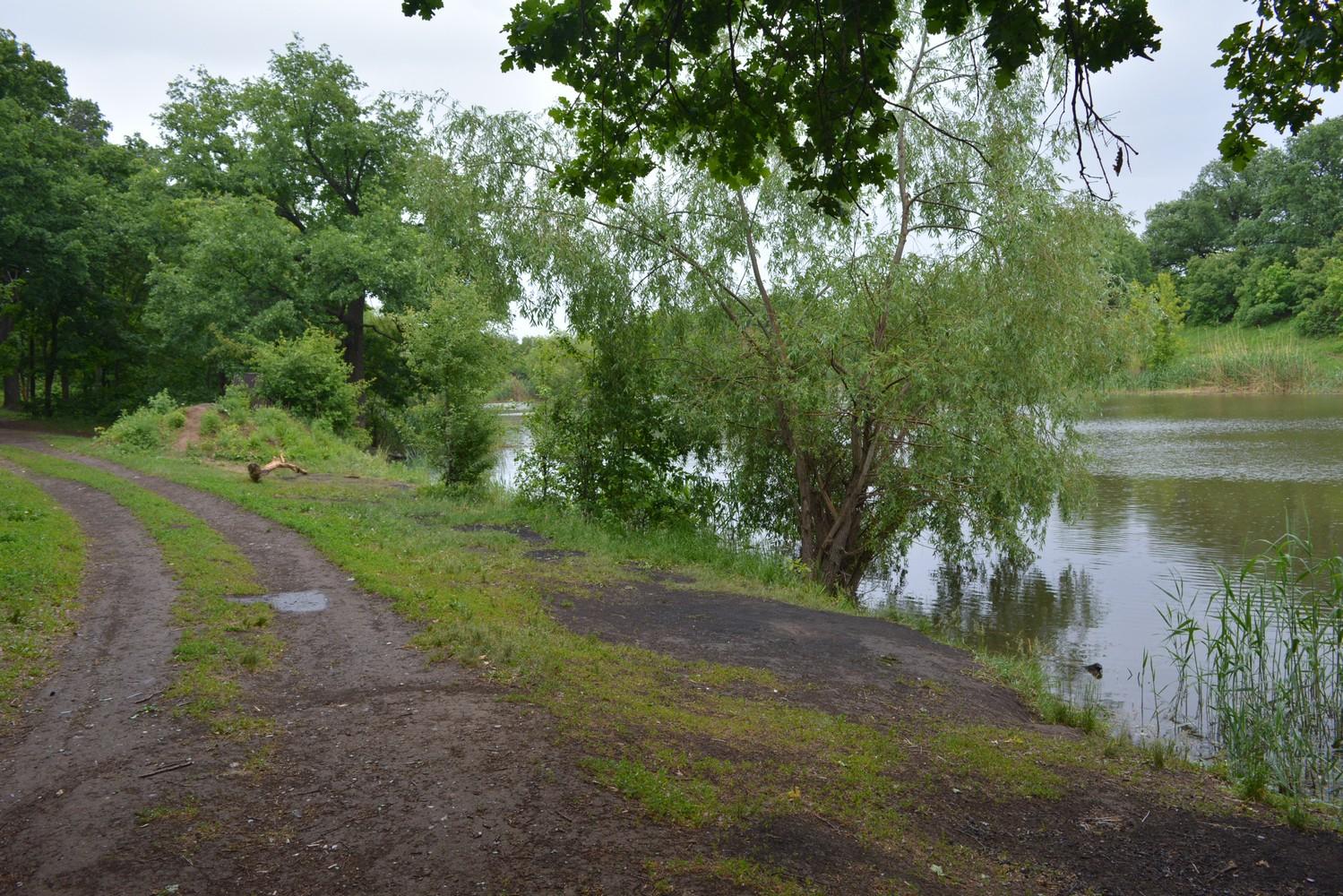 Пруд Семхоз адаптируют для рыбалки в Саратове. 15692.jpeg