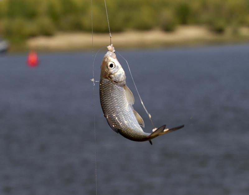 Мужчину осудили за одну пойманную рыбу. 15697.jpeg