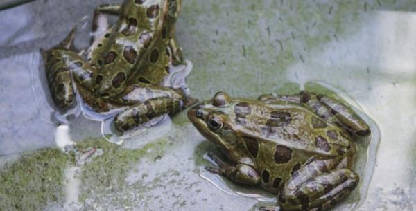Украинских червей и лягушек не пустили в Россию. рыба, лягушки, червь, Россельхознадзор, Украина