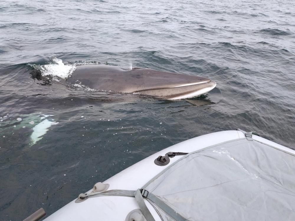 Мурманский рыбак поздоровался с китами. 15702.jpeg