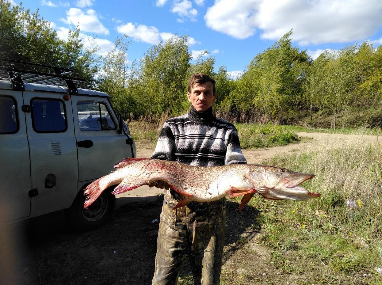 Омский рыбак поймал более чем метровую щуку. 15704.jpeg