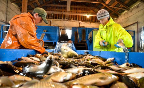 Рыбхозам могут разрешить получать участки без торгов. рыба, рыбхозы, участок