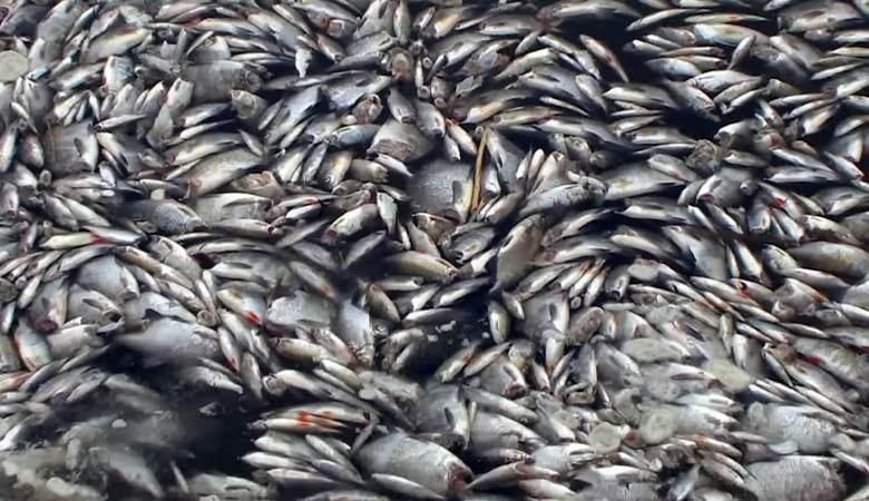 В Германии обнаружили тонны обезглавленной рыбы. 14709.jpeg
