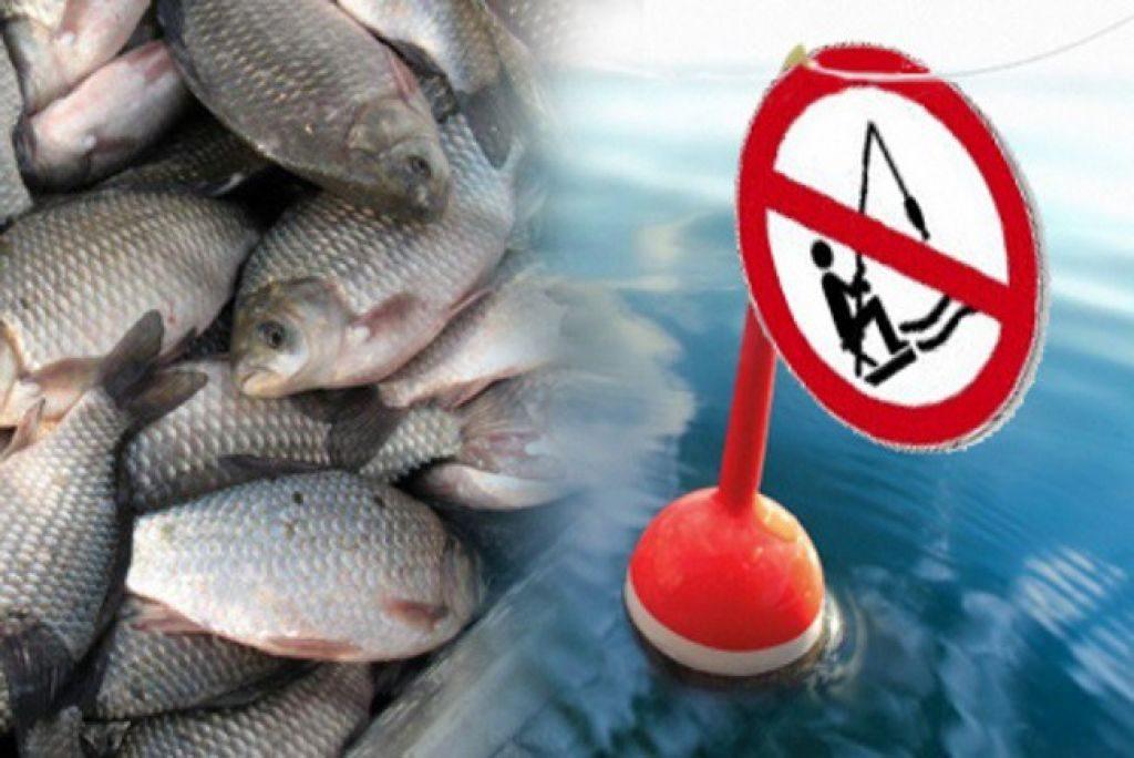 Анатолий Козырь: Размеры минимального вылова рыб прописаны еще до подписания закона. 15717.jpeg