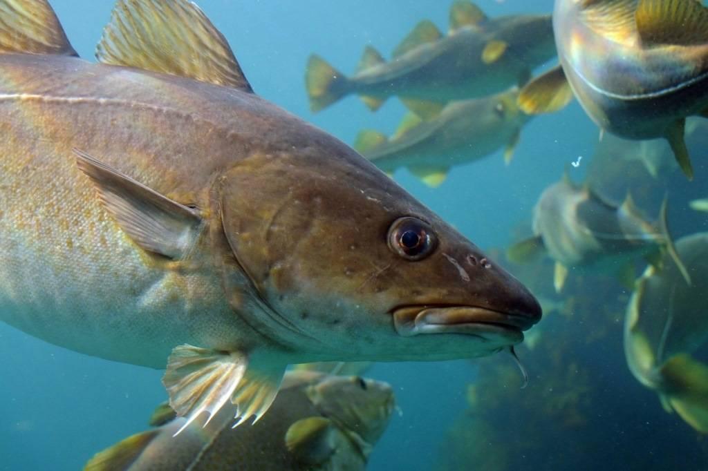 «Доступная рыба» в Мурманске еще недоступна. 15720.jpeg