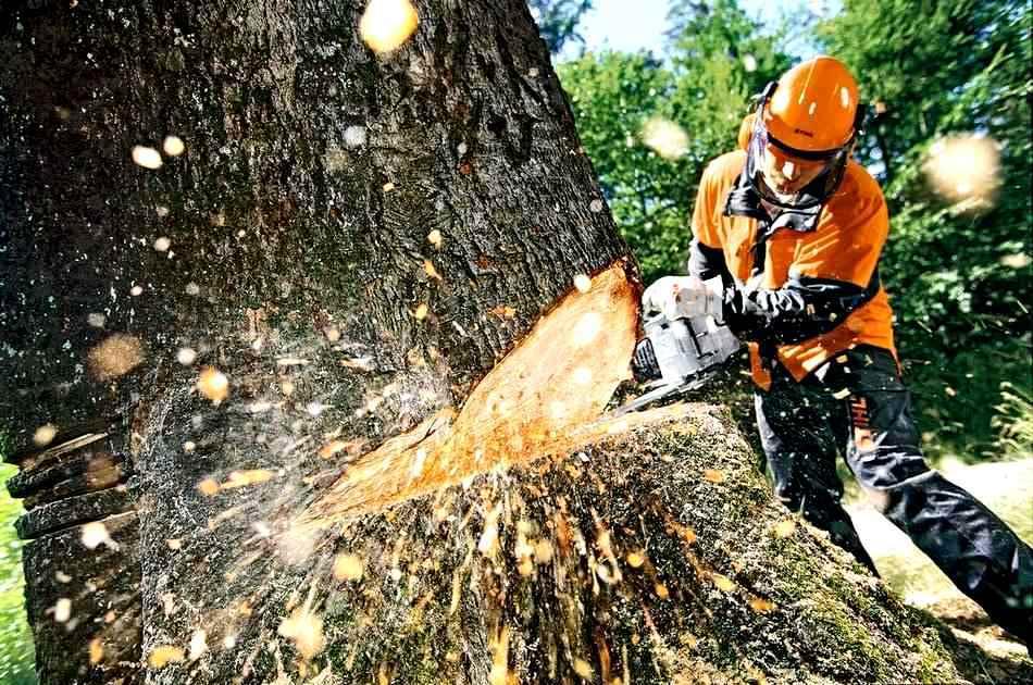 Экспорт леса в Китай ограничивать не собираются. 14722.jpeg