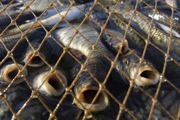 Помогите бороться с незаконной рыбалкой с Global Fishing Watch. 14724.jpeg