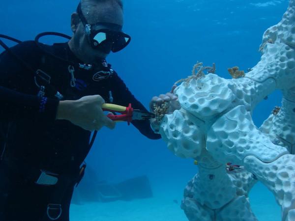 Ученые напечатали кораллы на 3D-принтере для спасения рыб. рыбы, кораллы, 3D-принтер, Университет имени Бен-Гуриона, Негева, Надав Шашар, Израиль